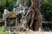 Tree On Angkor Ruins — Stock Photo