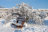Winter trees and bench — Stock Photo