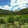 Stock Photo: Colorado Meadow