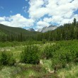 Colorado Meadow - Photo