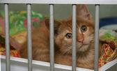 Kitten in Kennel — Stock Photo
