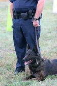 Policejní pes — Stock fotografie