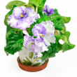 Stock Photo: Pot with wight and violet violets
