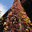 Climbing Plant on Alaskan Way Viaduct - Stock Photo