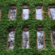 Ivy Covered Office Building in Seattle - Stock Photo