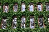 Ivy Covered Office Building in Seattle — Stock Photo