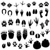 животных след трек вектор — Cтоковый вектор