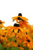 Beautiful yellow flowers — Stock Photo
