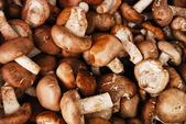 Many of Chinese mushroom in fresh market — Stock Photo