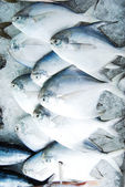 Many butterfish in fresh market — Stock Photo