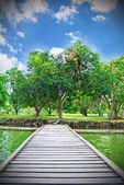 Floating bridge with the tree — Foto Stock