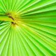 Texture of green palm leaf background — Stock Photo