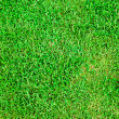 Stock Photo: Fresh green grass soccer field background
