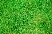 Fresh green grass soccer field background — Stock Photo