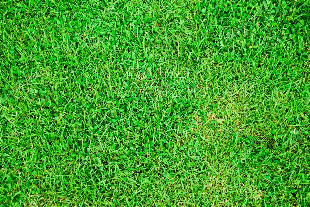 Grass Soccer Field Vector Fresh Green Grass Soccer Field