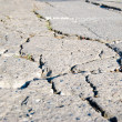 Cracked road flooring texture - Stock Photo