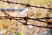 Old rusty barb barbed thorn fence wire — Stock Photo