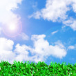 Green grass field and beautiful sky — Stock Photo
