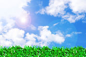 Green grass field and beautiful sky — Stock Photo