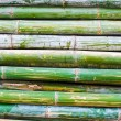 Pile of bamboo closeup — Stock Photo