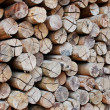 Pile of wood in logs storage — Stock Photo