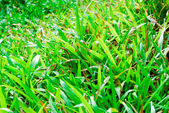 Closeup of fresh green grass field — Stock Photo
