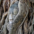 Stock Photo: Head of Buddha in tree