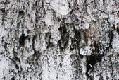 Cracked dirty wall background texture — Stock Photo