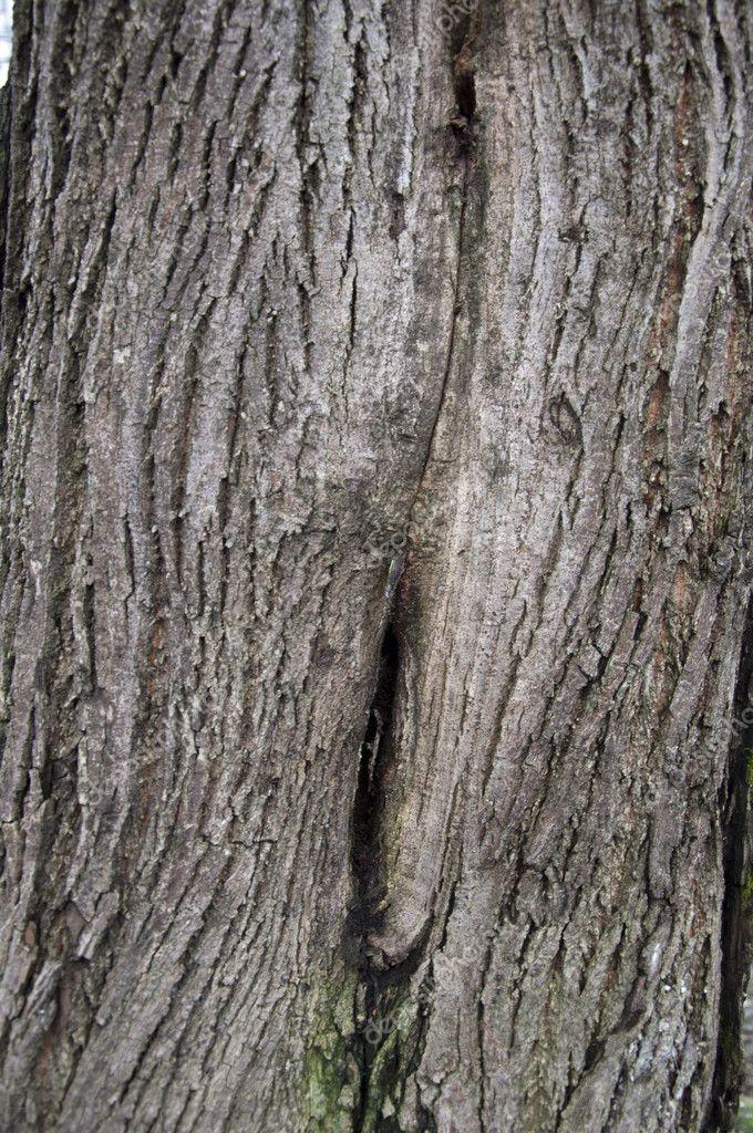 tree park maple - photo #8