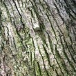Banyan tree bark — Stock Photo
