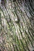 Banyan tree bark — Stock Photo