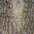 Tree bark — Stock Photo #4358575