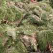 Bundles of grass — Stock Photo