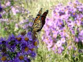 Toronto Lake Butterfly & flowers 2005 — Stock Photo