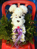 Or Yehuda chrysanthemum dog on a chair 2010 — Stock Photo