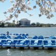 Washington Cherry Blossoms and Jefferson Memorial March 2010 — Stock Photo