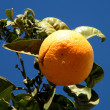Or Yehuda Orange 2010 - Stock Photo