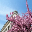 Washington Sakura near Church 2010 — Stock Photo