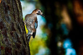 Close up of a bird sitting on pine tree bark (Punta Ala/Tuscany/ — Stock Photo
