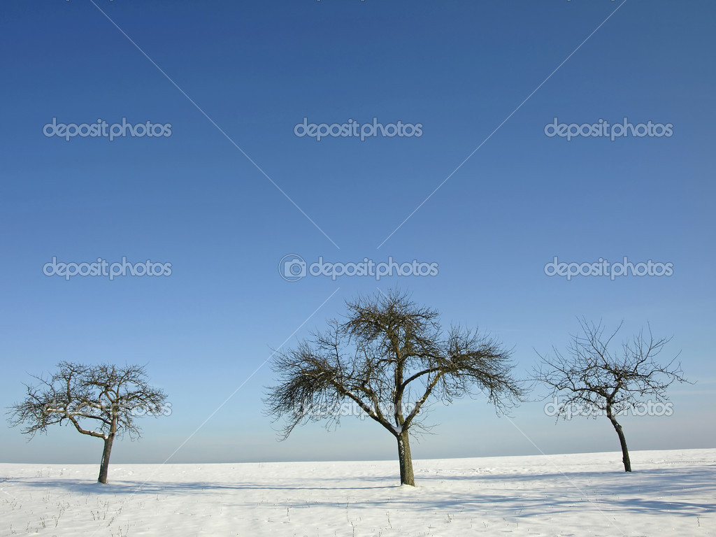 trees in wintertime — Stock Photo #3949257