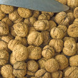 Walnut — Stock Photo #3964608