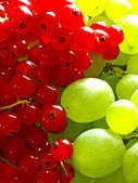 Currant and grapevine — Stock Photo