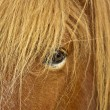 Horse eye — Stock Photo #4176166