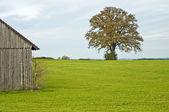 Oak with barn — Stock Photo