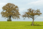 Oak and apple tree — Stock Photo