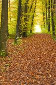 Orman ini sonbahar — Stok fotoğraf