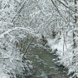 Winter scene with creek — Stock Photo