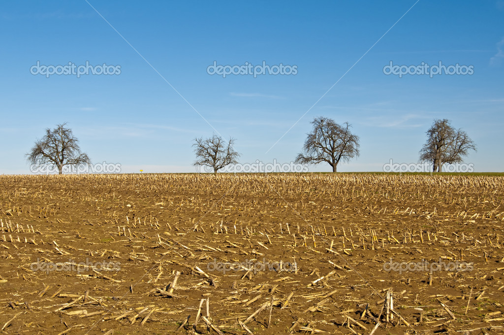 Trees with stubble field  Stock Photo #4899903