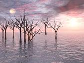 Coucher de soleil arbres morts — Photo
