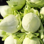 White lotus flower bud — Stock Photo #4217046